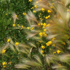Grain Series